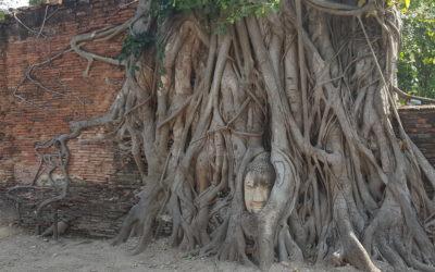 Historical City of Ayutthaya and Floating market