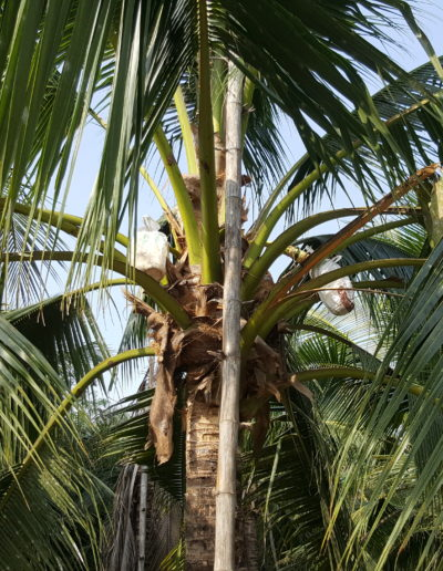Coconut sugar factory